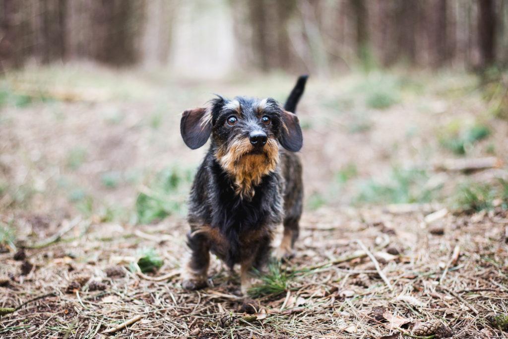 Hondenfotograaf limburg